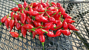 Agata's Tongue (Big Chupe) - Pepper Seeds - White Hot Peppers