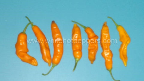 Aji Ahuachapan - Pepper Seeds - White Hot Peppers