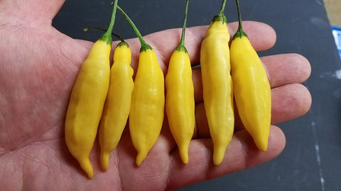 Aji Lemon Drop - Pepper Seeds - White Hot Peppers