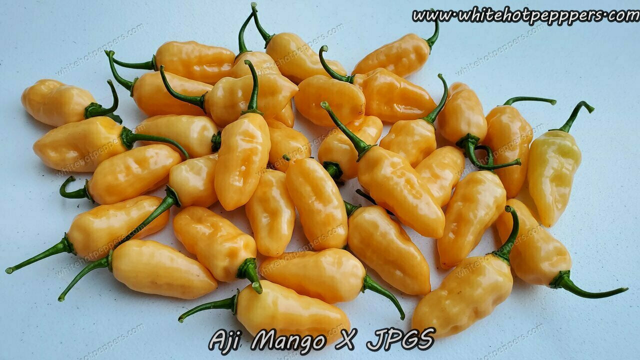 Aji Mango x JPGS - Pepper Seeds - White Hot Peppers