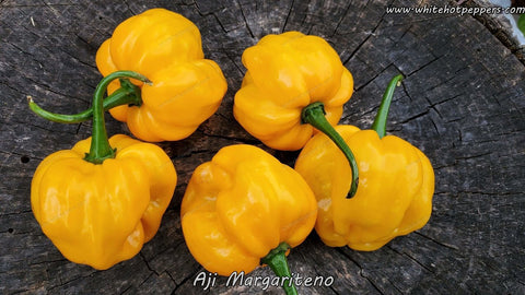 Aji Margariteno - Pepper Seeds - White Hot Peppers