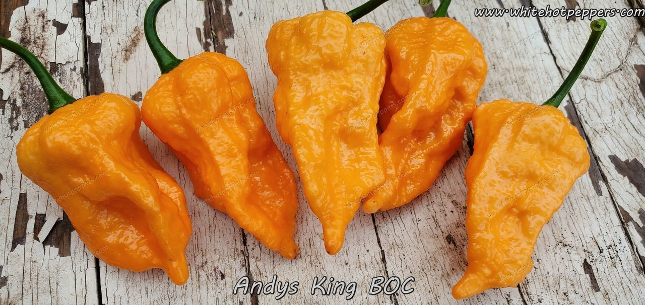 Andy's King BOC - Pepper Seeds - White Hot Peppers