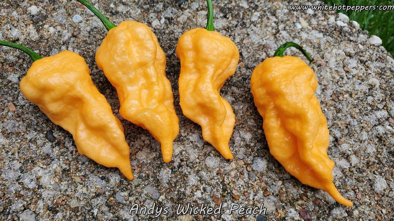 Andy's Wicked Peach - Pepper Seeds - White Hot Peppers