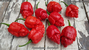 Apocalypse Scorpion - Pepper Seeds - White Hot Peppers