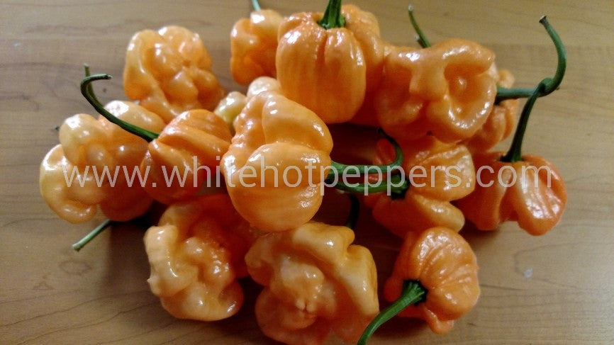 Bahamian Goat - Pepper Seeds - White Hot Peppers