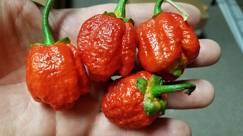 7 Pot Bubblegum (BBG7) Moruga - Pepper Seeds - White Hot Peppers