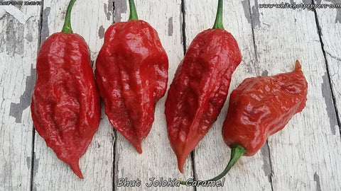 Bhut Jolokia (Ghost) Caramel - Pepper Seeds - White Hot Peppers