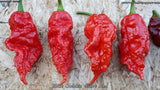 Bhut Jolokia (Ghost) Giant Red - Pepper Seeds - White Hot Peppers