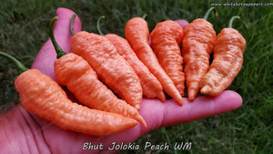 Bhut Jolokia (Ghost) Peach WM (Isolated) - Pepper Seeds - White Hot Peppers