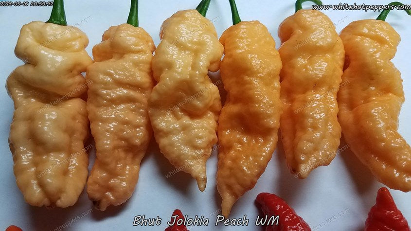 Bhut Jolokia (Ghost) Peach WM - Pepper Seeds - White Hot Peppers