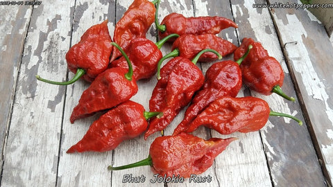 Bhut Jolokia (Ghost) Rust - Pepper Seeds - White Hot Peppers