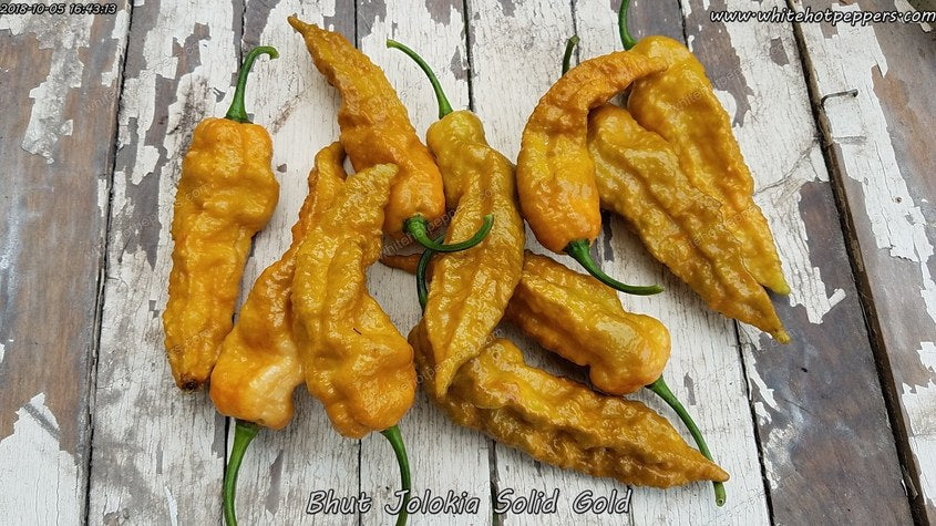 Bhut Jolokia (Ghost) Solid Gold - Pepper Seeds - White Hot Peppers