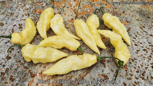 Bhut Jolokia (Ghost) White W Strain - Pepper Seeds - White Hot Peppers