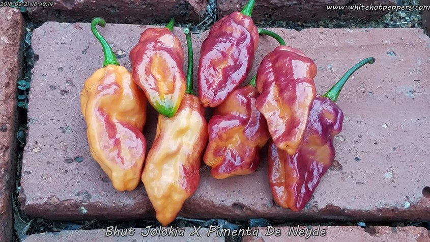 Bhut x Neyde - Pepper Seeds - White Hot Peppers