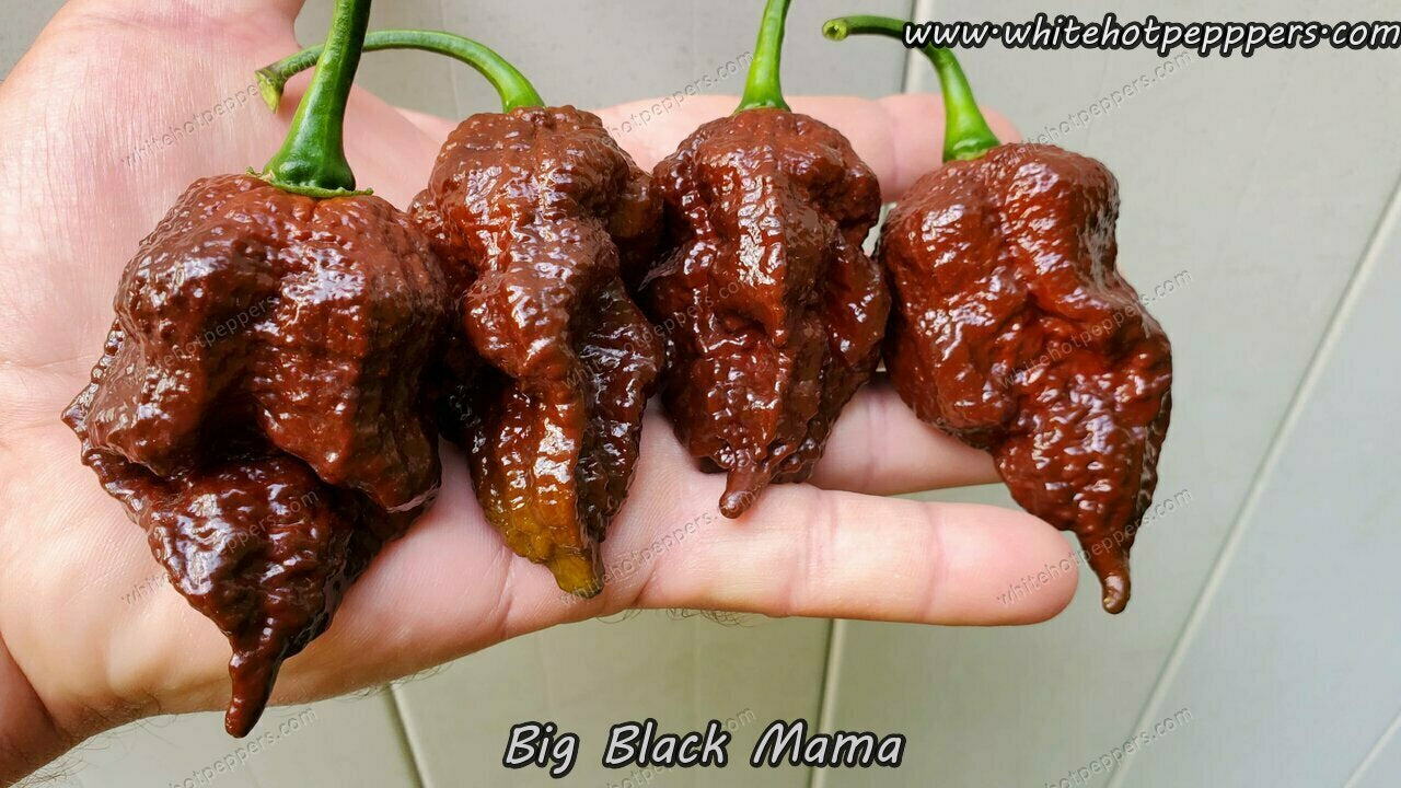 Big Black Mama - Pepper Seeds - White Hot Peppers