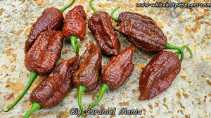 Big Caramel Mama - Pepper Seeds - White Hot Peppers