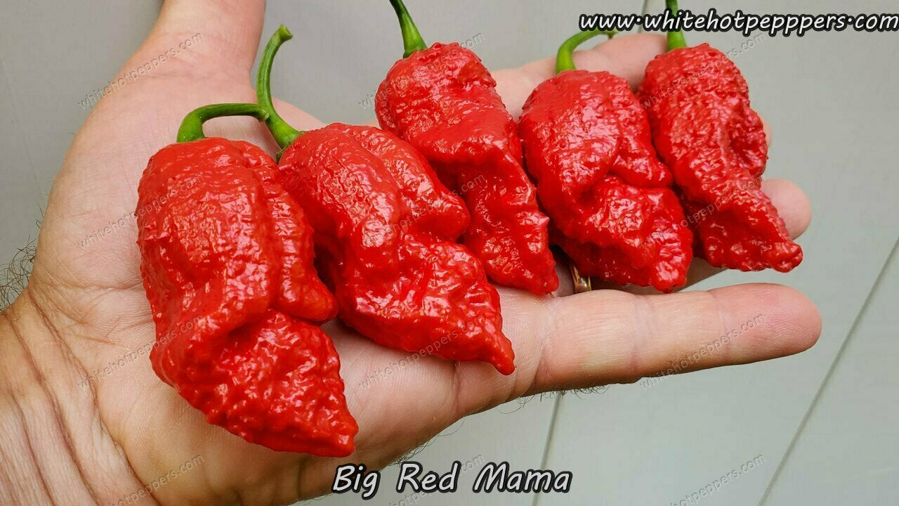 Big Red Mama - Pepper Seeds - White Hot Peppers