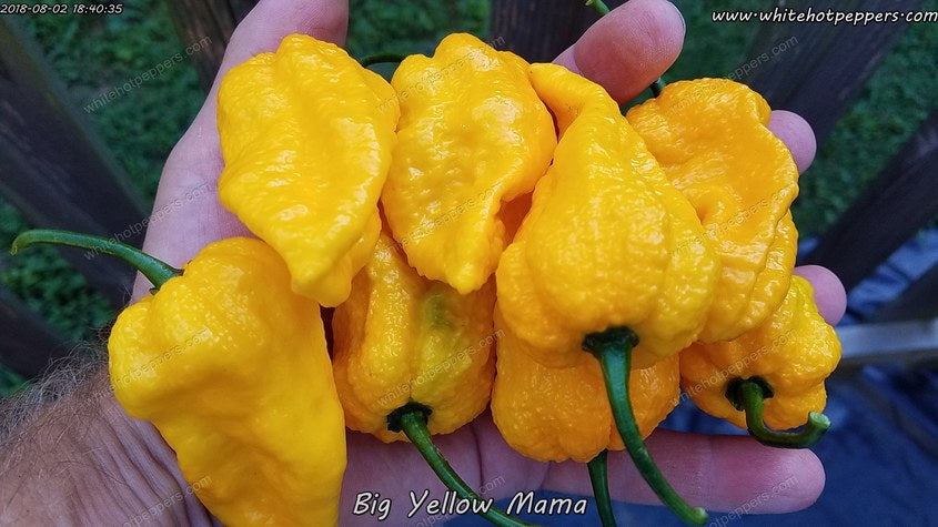 Big Yellow Mama - Pepper Seeds - White Hot Peppers