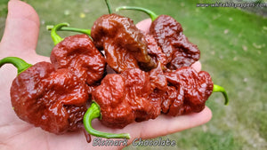 Bismark Chocolate - Pepper Seeds - White Hot Peppers