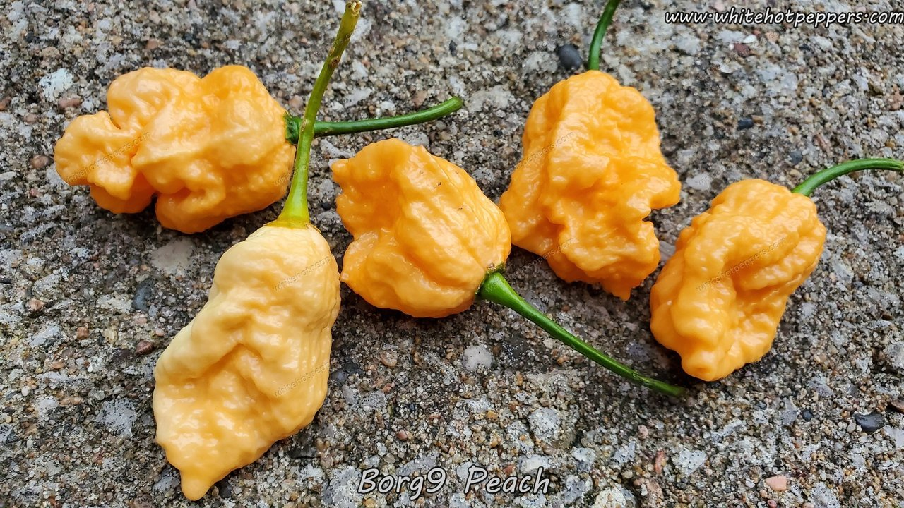 Borg 9 Peach - Pepper Seeds - White Hot Peppers