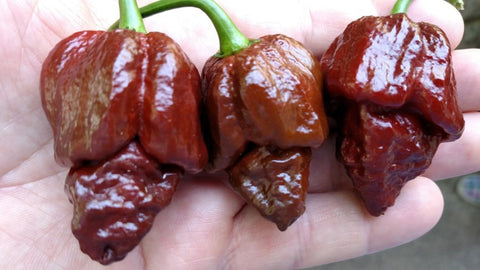 Brazilian Ghost Pepper Brown - Pepper Seeds - White Hot Peppers