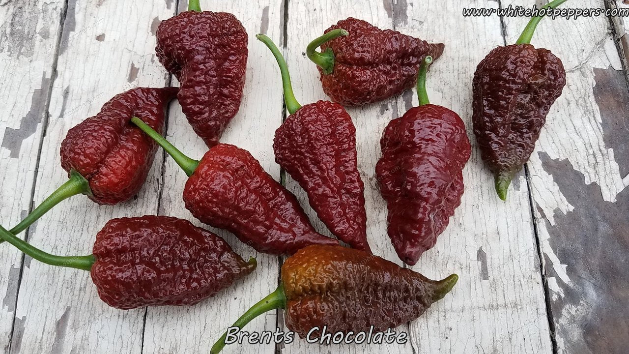 Brent's Chocolate - Pepper Seeds - White Hot Peppers