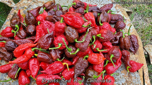 Brent's Red - Pepper Seeds - White Hot Peppers