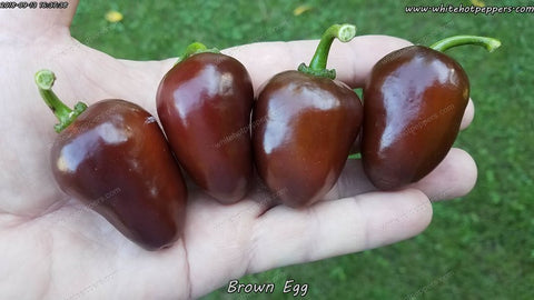 Brown Egg - Pepper Seeds - White Hot Peppers