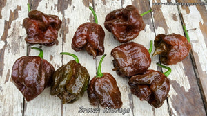 Brown Moruga - Pepper Seeds - White Hot Peppers