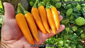 Bulgarian Carrot - Pepper Seeds - White Hot Peppers