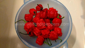 Carolina Reaper - Pepper Seeds - White Hot Peppers