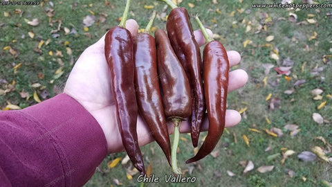 Vallero - Pepper Seeds - White Hot Peppers