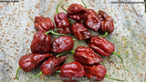 Chocolate Bhutlah (SM) - Pepper Seeds - White Hot Peppers