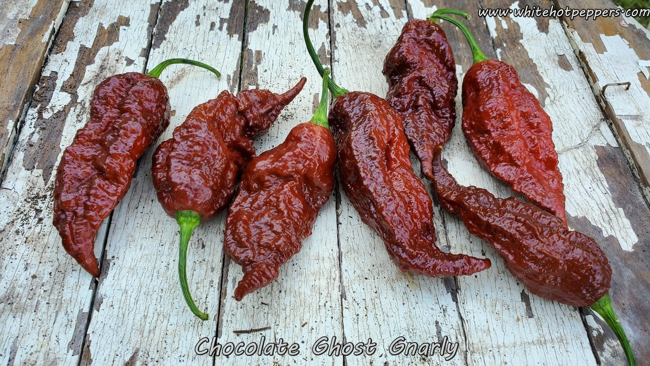 Chocolate Ghost Gnarly - Pepper Seeds - White Hot Peppers