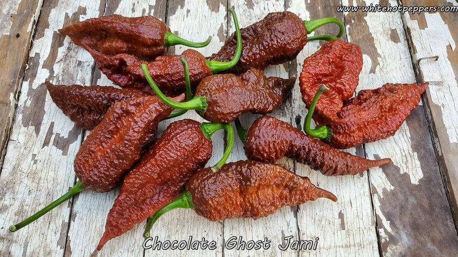 Chocolate Ghost Jami - Pepper Seeds - White Hot Peppers