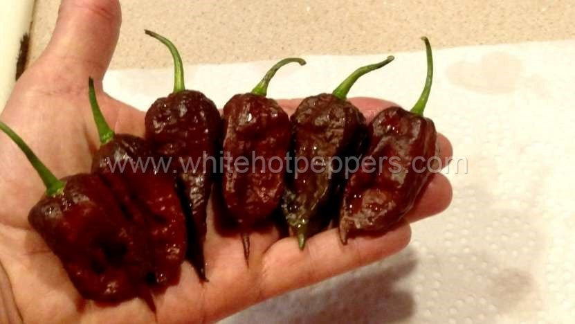 Madballz Chocolate - Pepper Seeds - White Hot Peppers