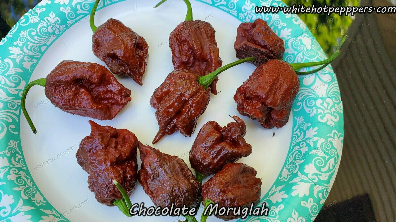 Chocolate Moruglah SLP (Isolated) - Pepper Seeds - White Hot Peppers