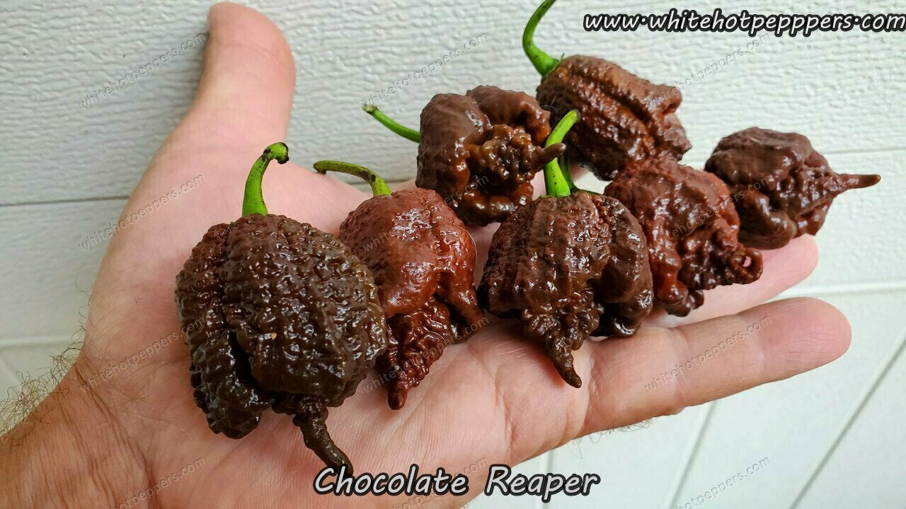 Chocolate Reaper - Pepper Seeds - White Hot Peppers
