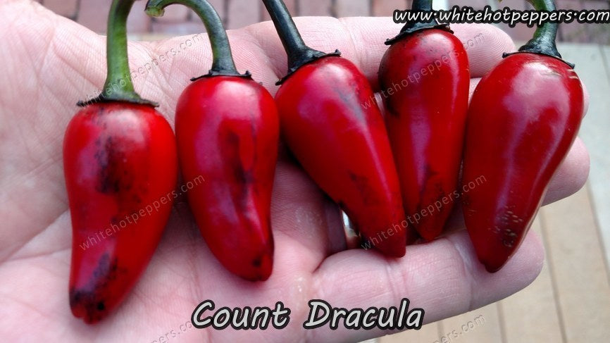 Count Dracula - Pepper Seeds - White Hot Peppers - 1