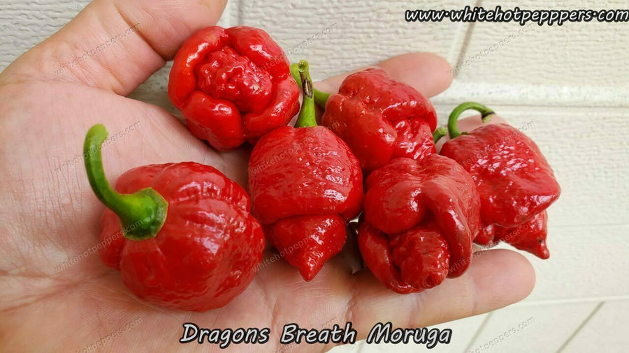 Dragon's Breath (Moruga) - Pepper Seeds - White Hot Peppers
