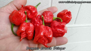 Dragon's Breath (Stinger) - Pepper Seeds - White Hot Peppers