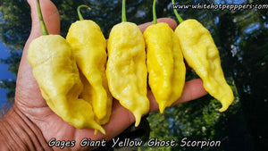 Gage's Giant Ghost Scorpion - Pepper Seeds - White Hot Peppers