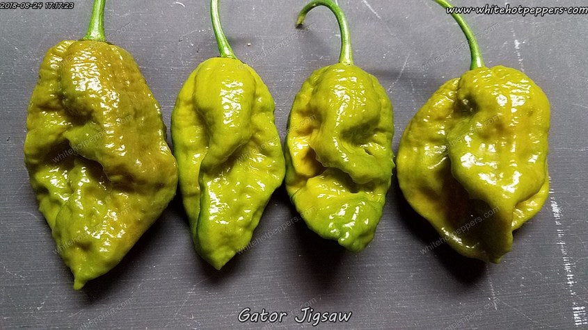 Gator Jigsaw - Pepper Seeds - White Hot Peppers