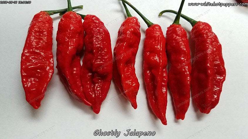Ghostly Jalapeno (Isolated) - Pepper Seeds - White Hot Peppers