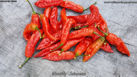 Ghostly Jalapeno - Pepper Seeds - White Hot Peppers