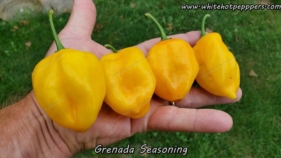 Grenada Seasoning - Pepper Seeds - White Hot Peppers
