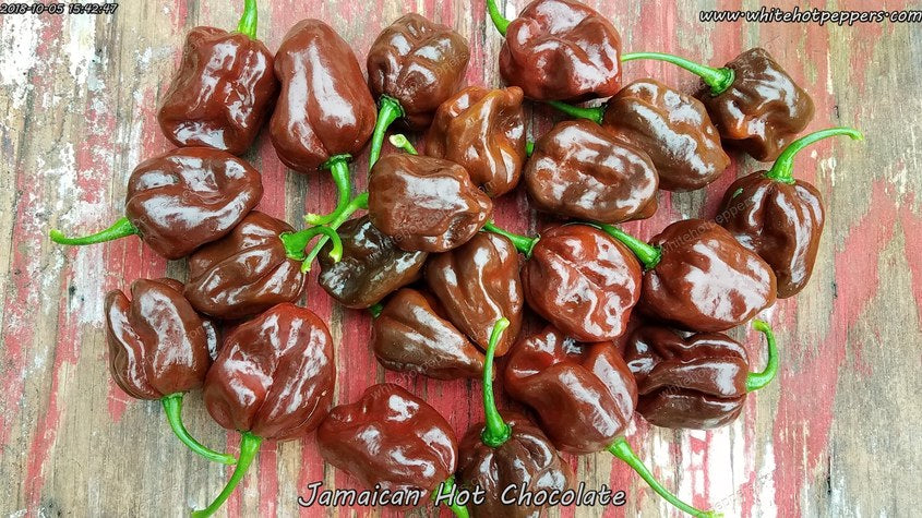 Jamaican Hot Chocolate - Pepper Seeds - White Hot Peppers