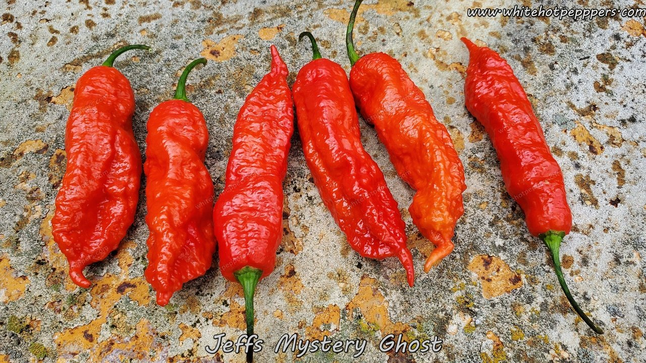 Jeff's Mystery Ghost - Pepper Seeds - White Hot Peppers