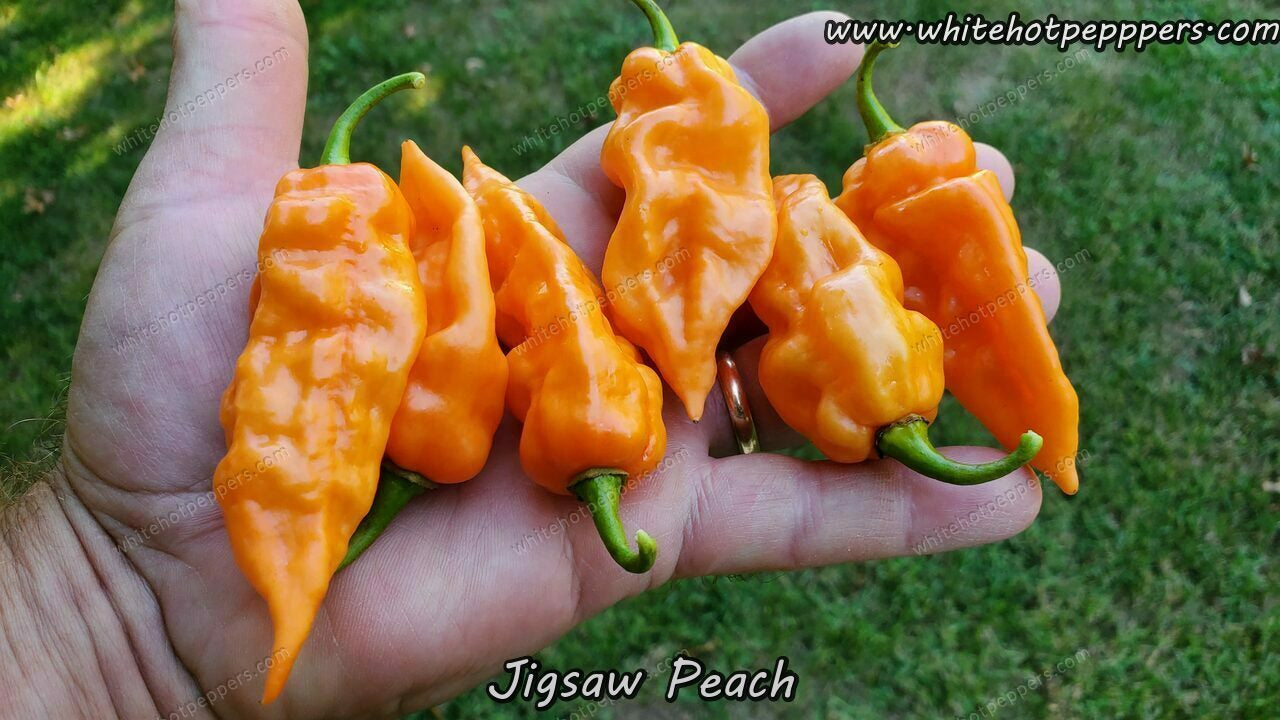 Jigsaw Peach - Pepper Seeds - White Hot Peppers