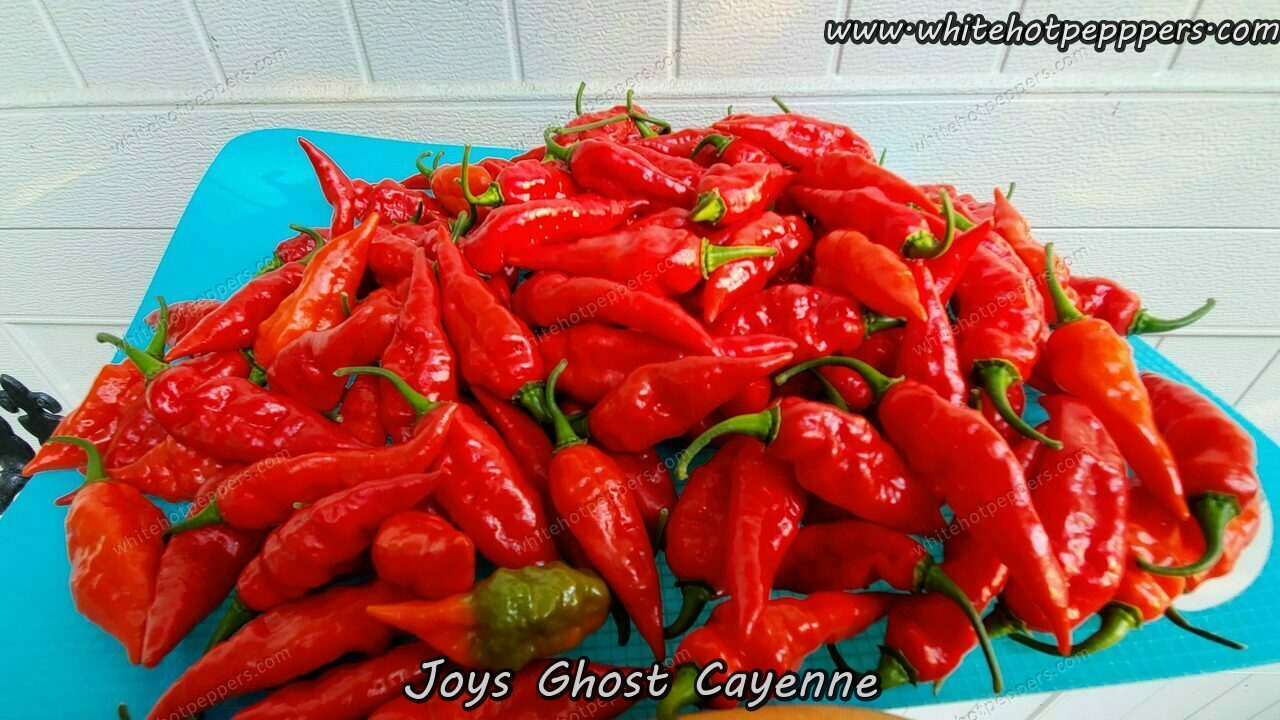 Joy's Ghost Cayenne (Off Pheno) - Pepper Seeds - White Hot Peppers